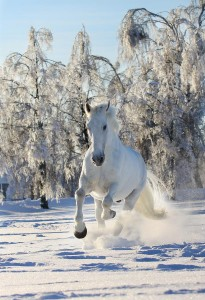 TT-horse